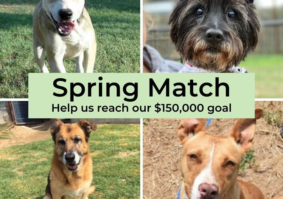 Spring Match Campaign